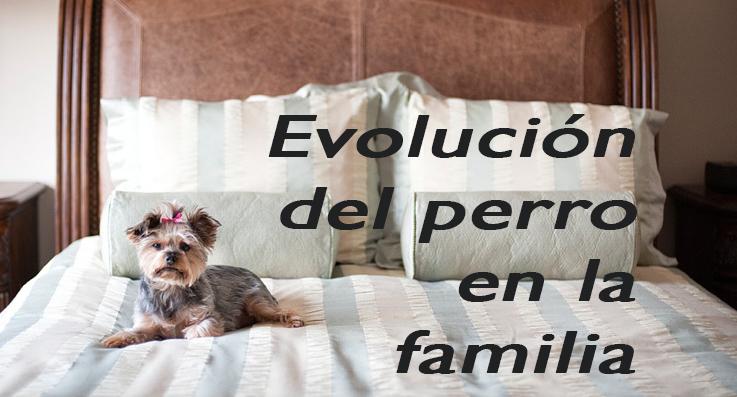 Evolución del perro en la familia